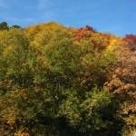 00335_leaves