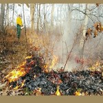 03444_DakotaCountyParksControlledBurns